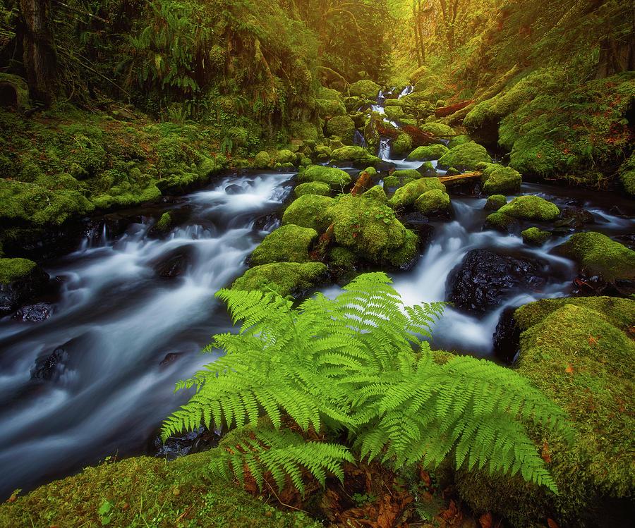 Gorton Creek Fern Photograph
