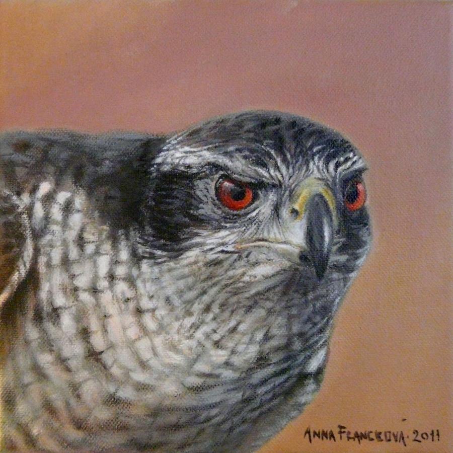 Goshawk Painting - Goshawk by Anna Franceova