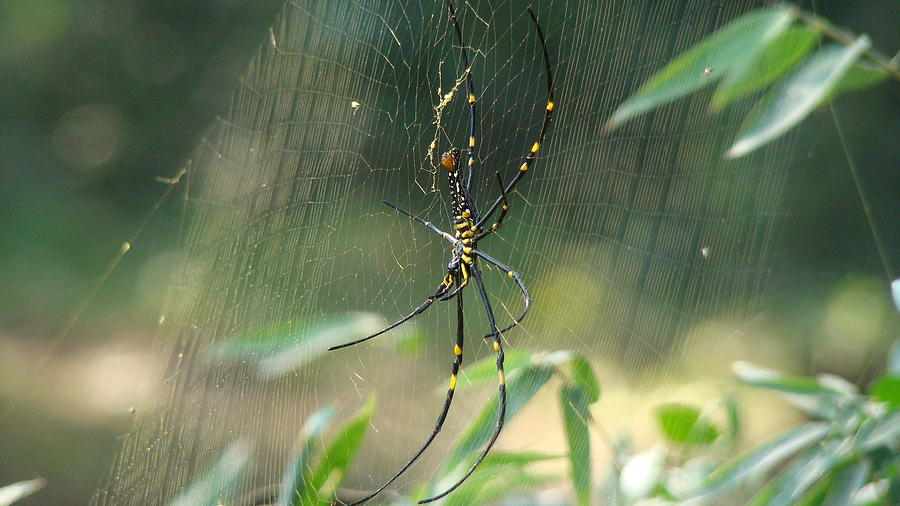 Spider Photograph - Gossamer Art by Abir Bordoloi