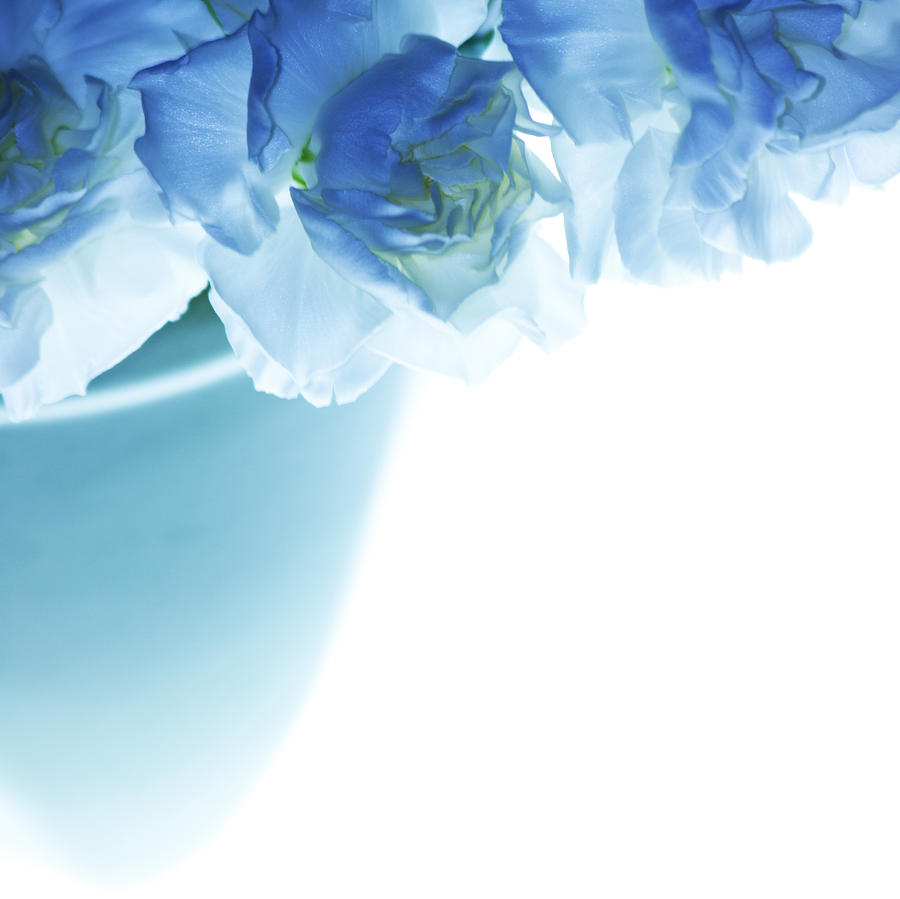 Carnations Photograph - Got The Blues by Rebecca Cozart