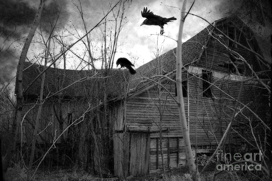 Gothic Surreal Haunting Old Barn With Crows Ravens