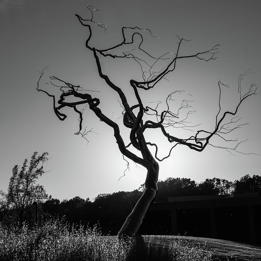 Gothic twisted tree black and white by gregory ballos