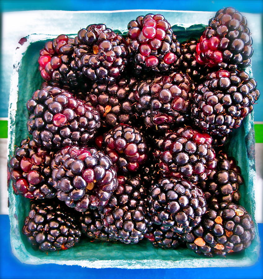 Black Berries Photograph - Gotta Have These by Gwyn Newcombe