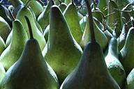 Pear Photograph - Gourd Light by Kate Bell