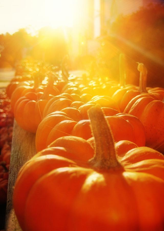 Fall Photograph - Gourds For Sale by JAMART Photography