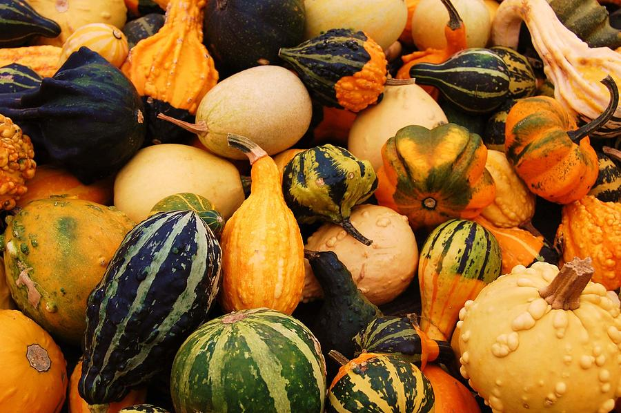 Squash Photograph - Gourds by Jame Hayes