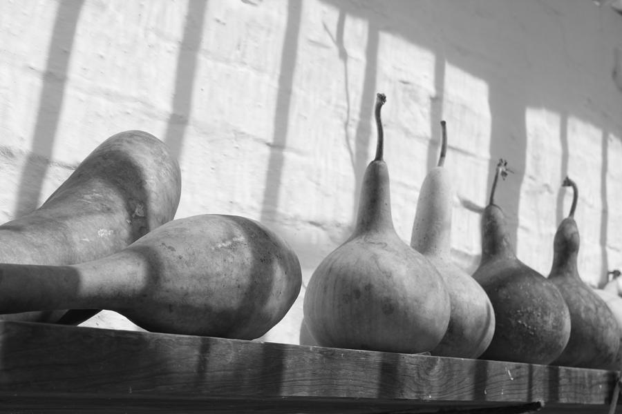 Gourds Photograph - Gourds On A Shelf by Lauri Novak
