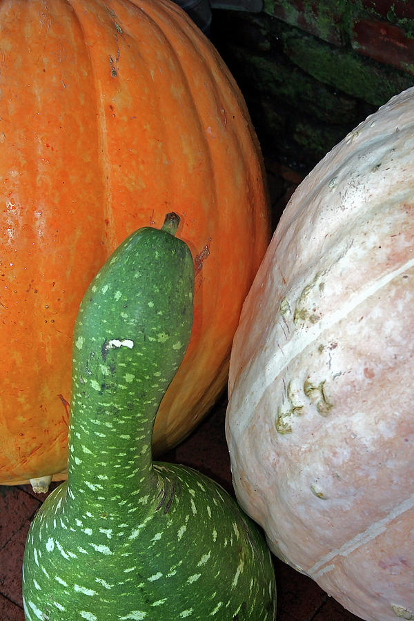Nature Photograph - Gourds by Sharon Mayhak