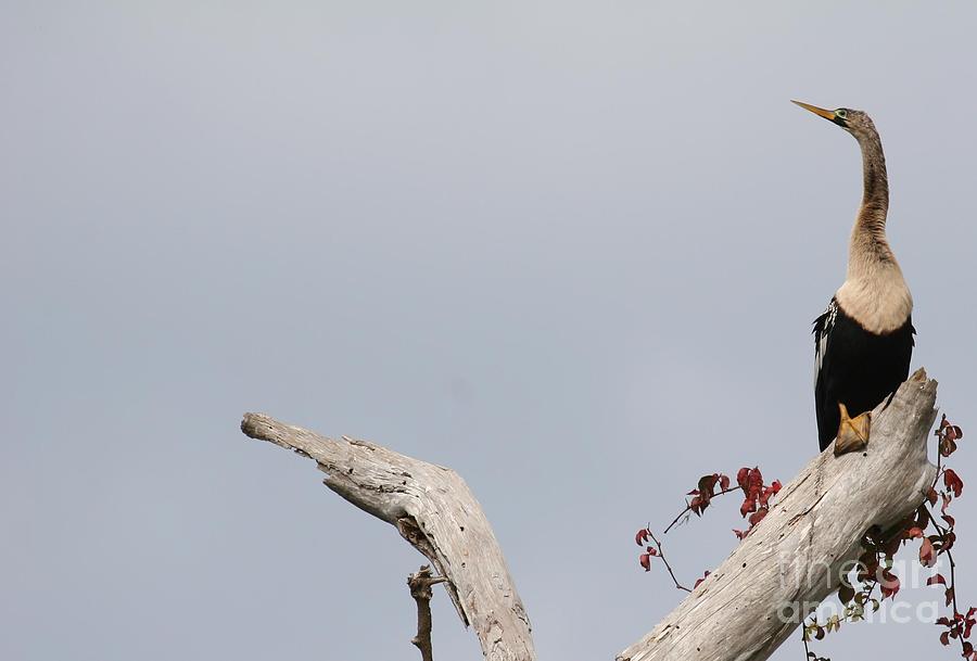 Bird Photograph - Grace by Tracy A Miller
