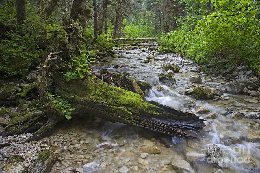 Stream Photograph - Graceful Ending by Tim Grams