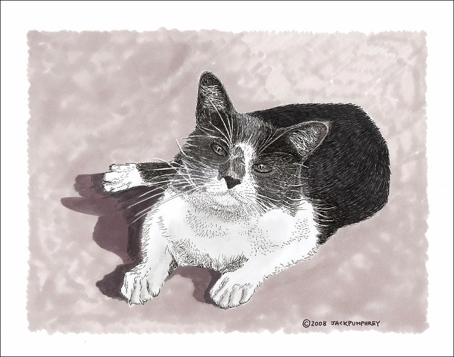 Gracie Jacks Cat Now Drawing by Jack Pumphrey