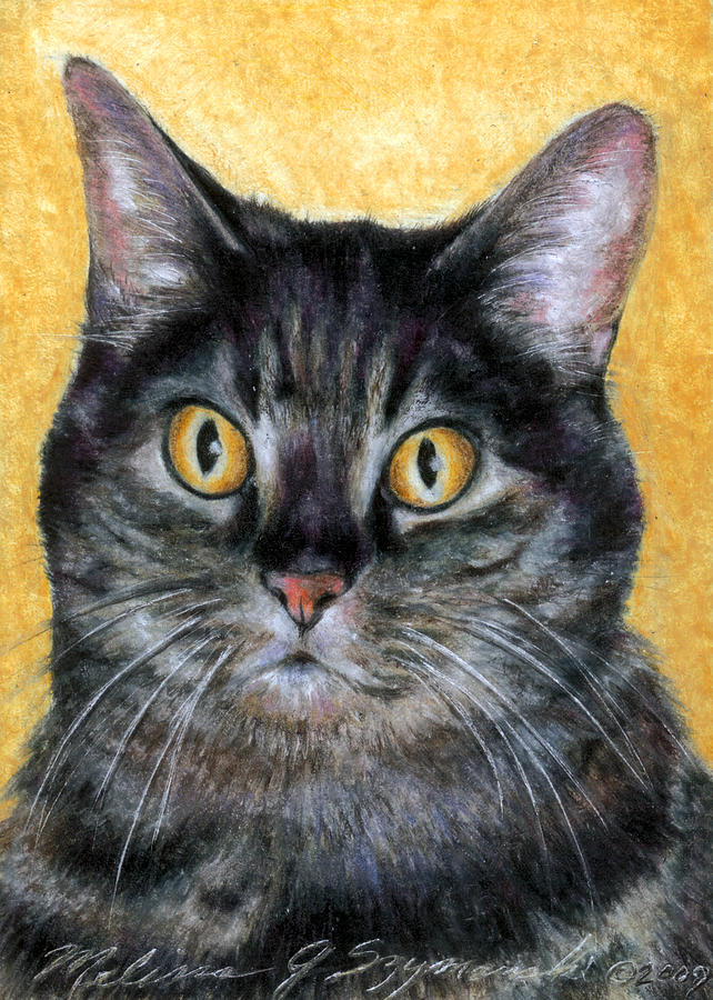Cat Drawing - Gracie by Melissa J Szymanski