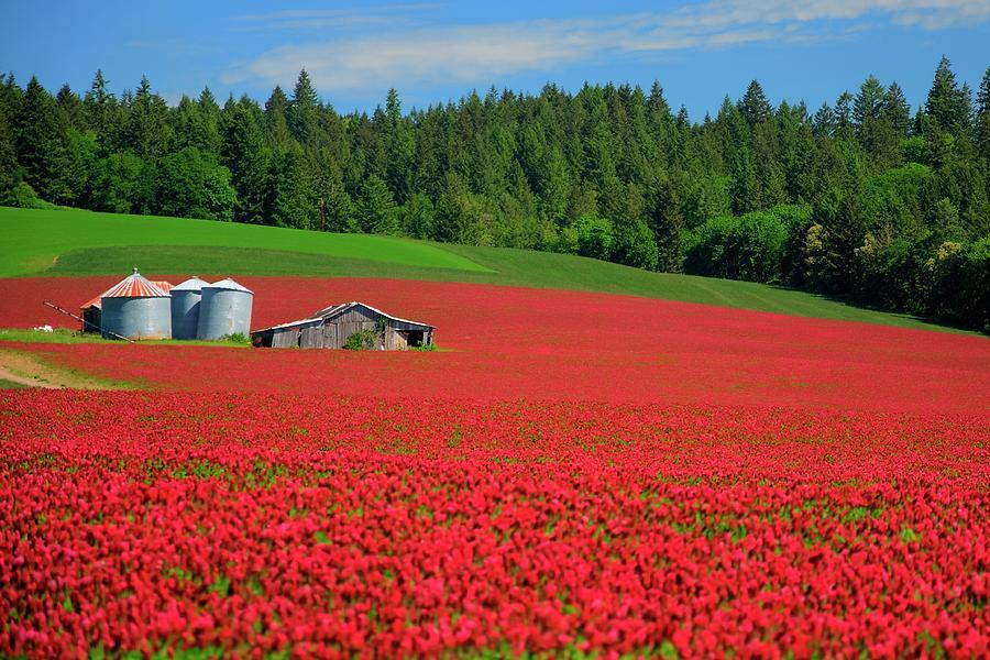 Grain Bins Barn Red Clover Photograph