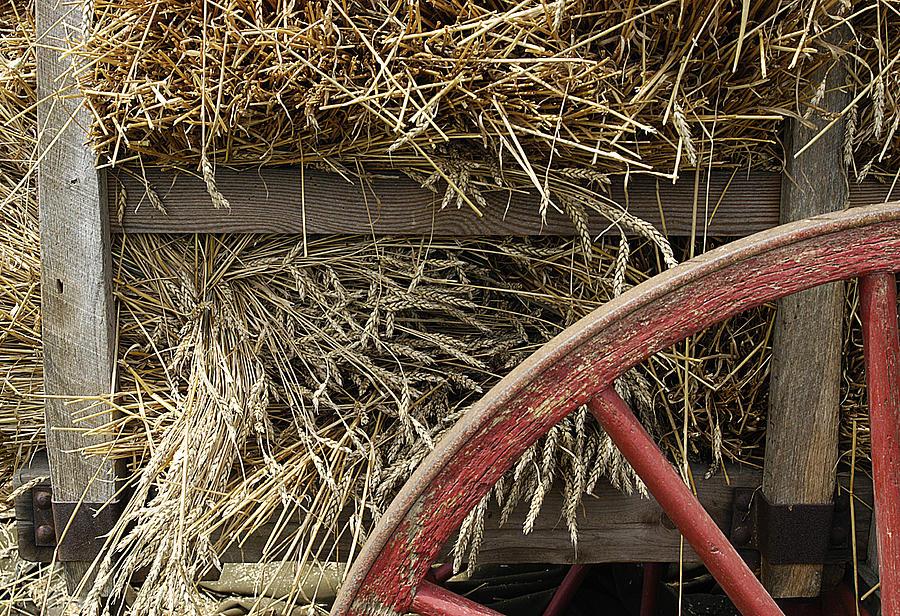 Grain Photograph - Grain Wagon by Robert Ponzoni