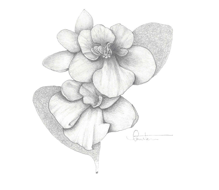 Gram's Violets Drawing by Kristen Stevenson