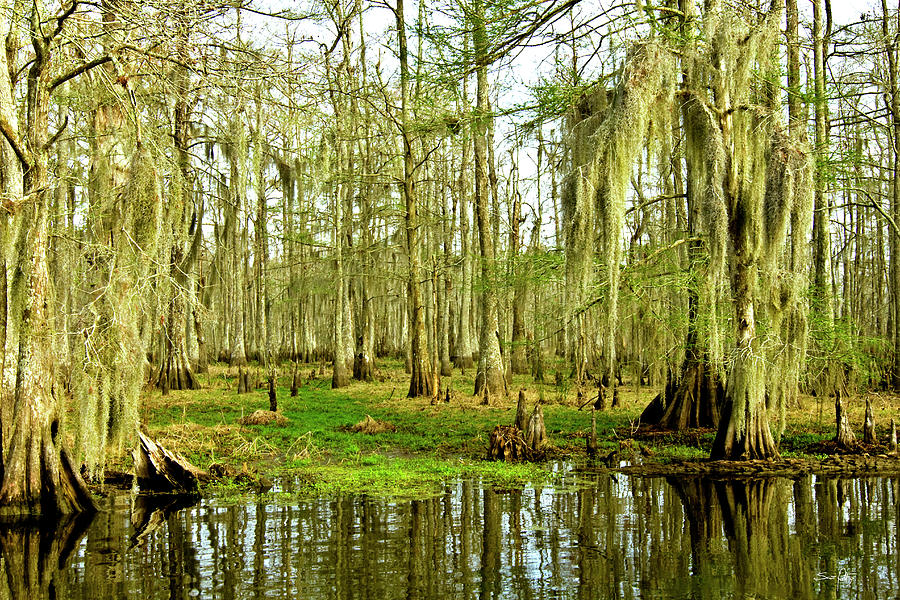 Swamp Photograph - Grand Bayou Swamp by Scott Pellegrin