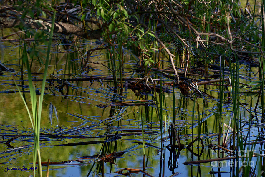 Water Photograph - Grand Beach Marsh by Joanne Smoley