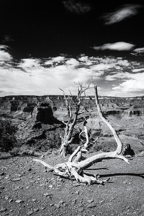 Grand Canyon Photograph - Grand Canyon Landscape by Alex Conu