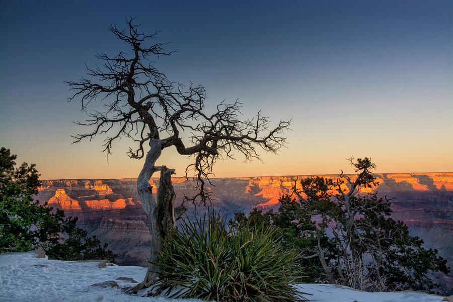 Arizona Photograph - Grand Canyon Lone Tree At Sunset by Gej Jones