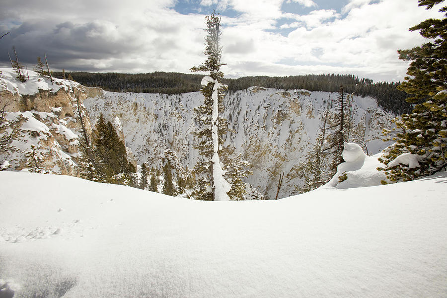 Grand Canyon Of Yellowstone National Park In Winter
