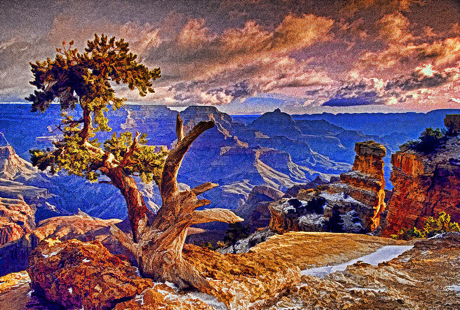 Grand Canyon National Park Photograph - Grand Canyon Pine by Dennis Cox WorldViews