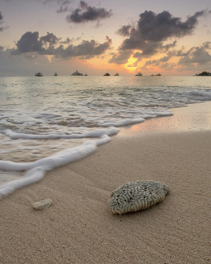 Grand Cayman Beach Coral at Sunset by Adam Romanowicz