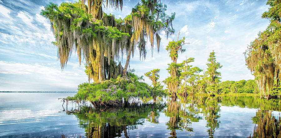 Grand Cypress by Ghostwinds Photography