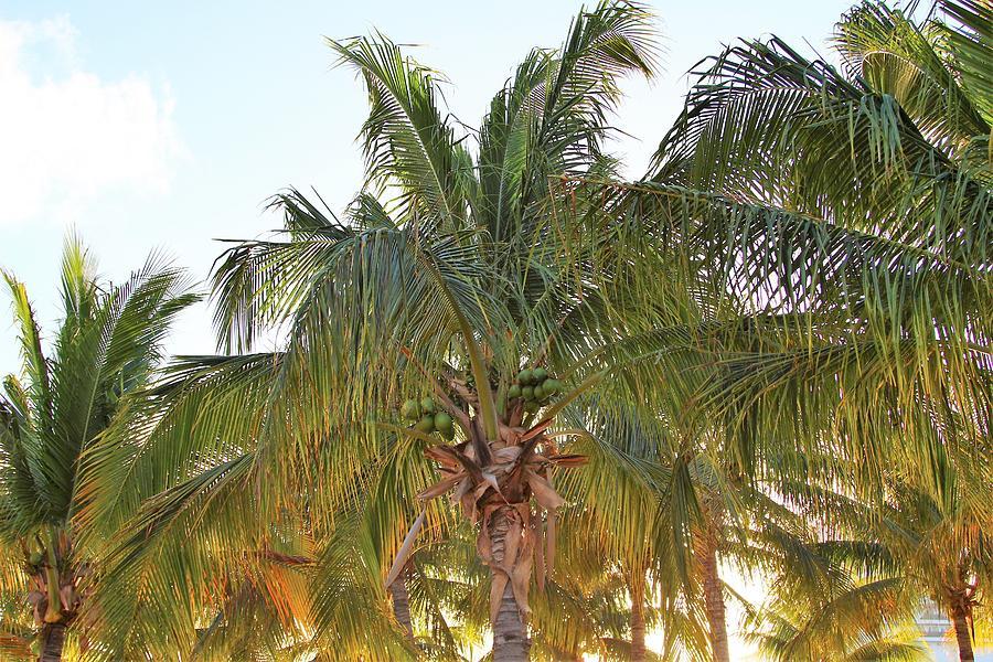 Beach Photograph - Grand Turk Palms On The Beach by Robert Smith