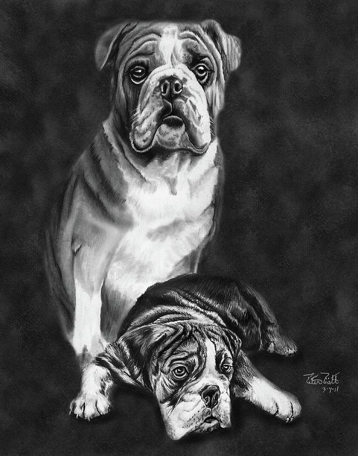 English Bulldog Drawing - Grandson Of Sampson by Peter Piatt