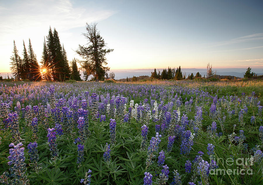 Artist In Residence Photograph - Granite Mountains Sunrise by Idaho Scenic Images Linda Lantzy