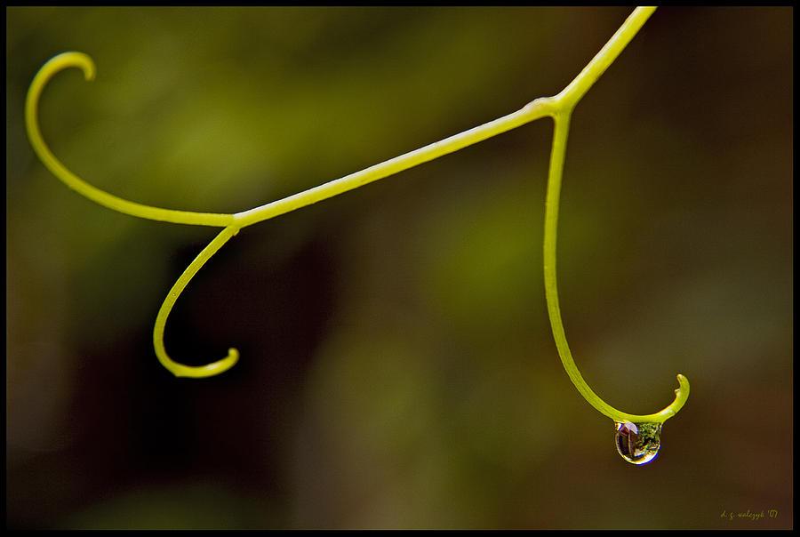 Flora Photograph - Grape Drop by Daniel G Walczyk