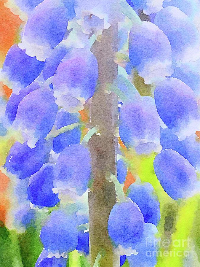 Grape Hyacinths 1 by Chris Scroggins