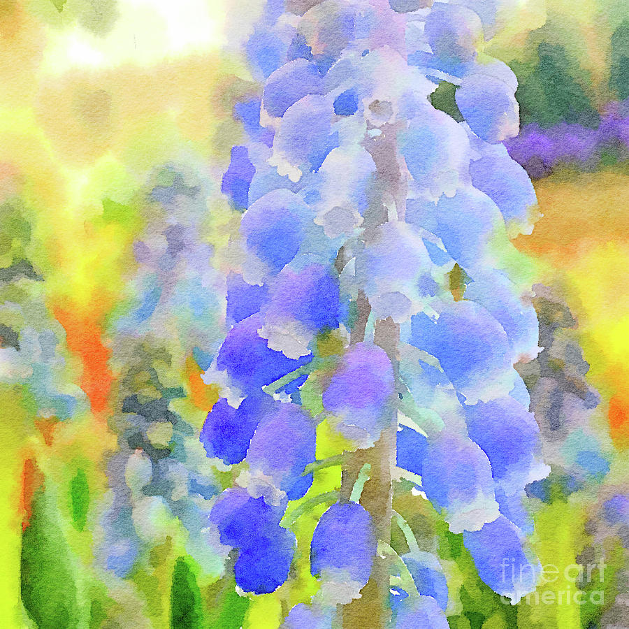 Grape Hyacinths 2 by Chris Scroggins