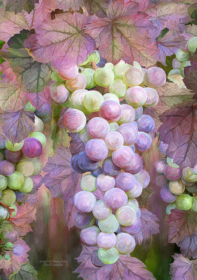 Grapes Of Many Colors by Carol Cavalaris