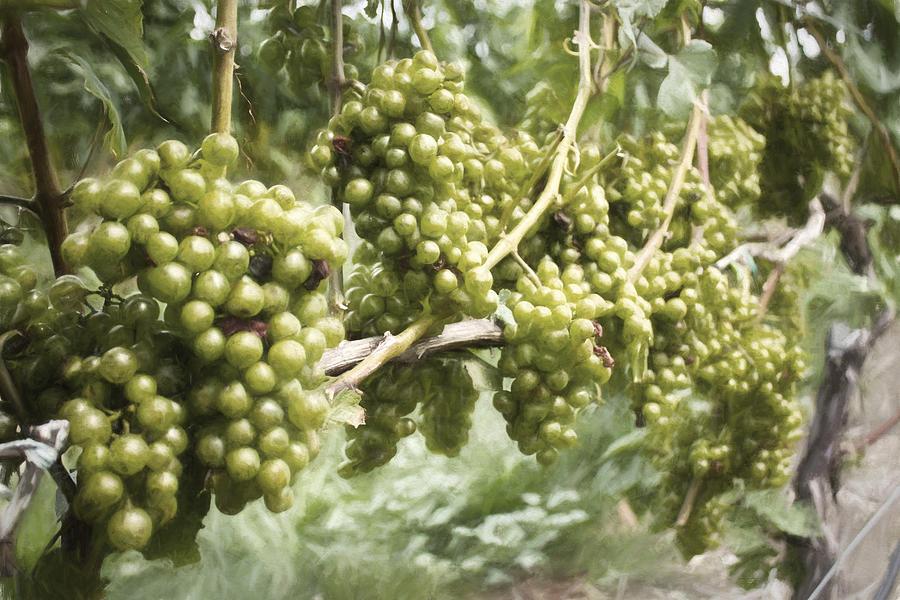 Grapes Photograph - Grapes by Zev Steinhardt
