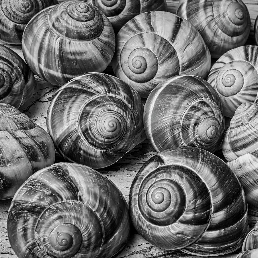 Graphic snail shells in black and white by garry gay