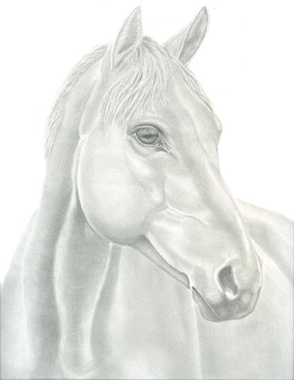Graphite Drawing - Graphite Portrait Of Horse by Tracey Costescu