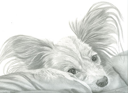 Graphite Drawing - Graphite Portrait Of Puppy by Tracey Costescu