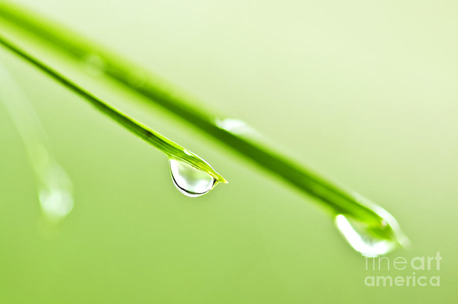 Grass Photograph - Grass Blades With Water Drops by Elena Elisseeva