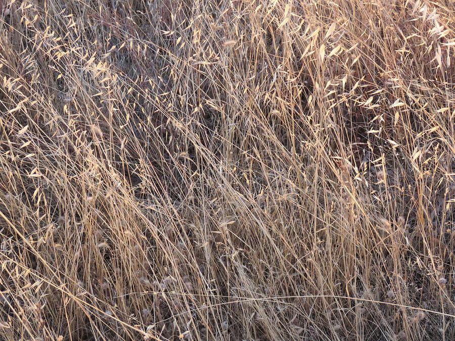 Pillow Photograph - Grass Detail by Verna Pharo