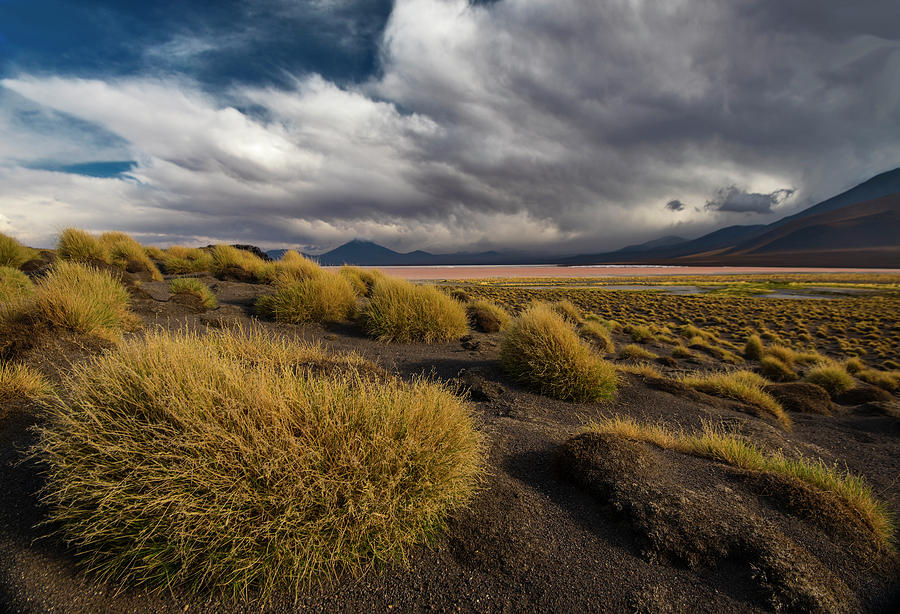 Landscape Photograph - Grass Hat by Aaron Bedell