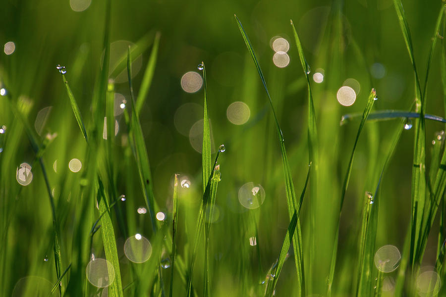 Grass in spring 5 by Kathy Adams Clark