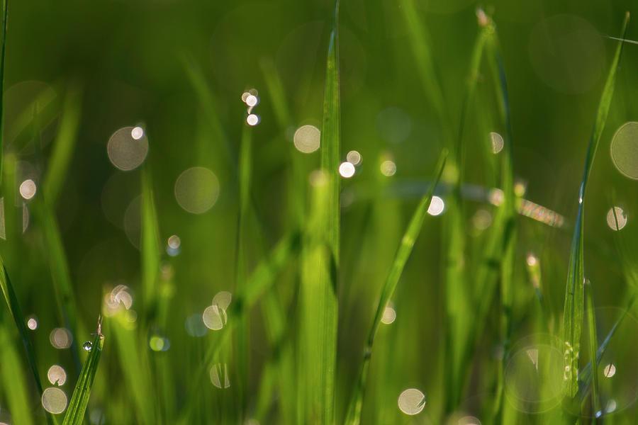 Grass in spring3 by Kathy Adams Clark