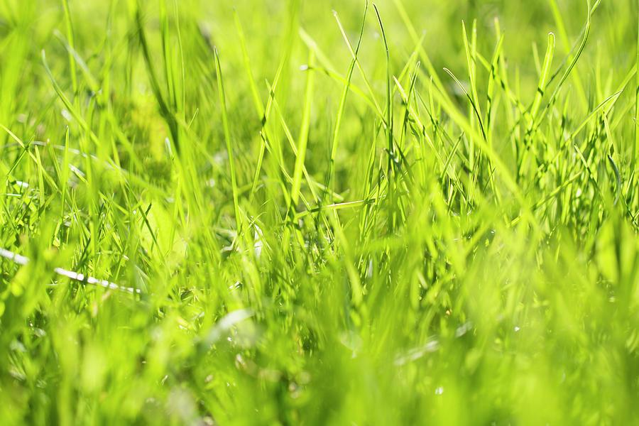 Grass Photograph - Grass in the light by Konstantin Bibikov