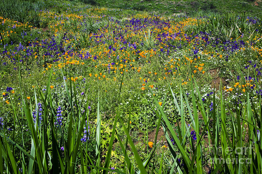 Landscape Photograph - Grass Screen by Greg Clure