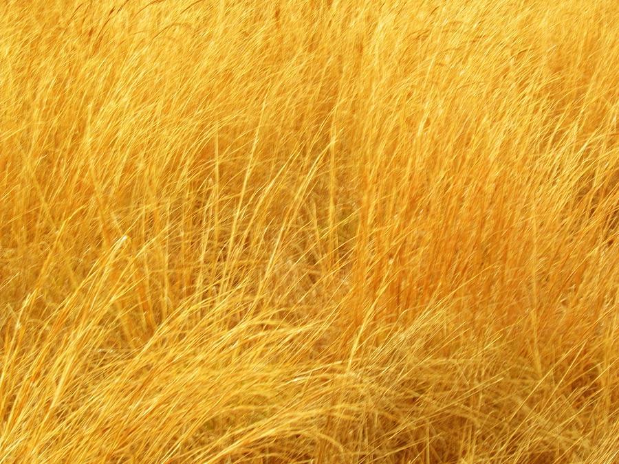 Sun Shades On Grass Photograph - Grass Shades by Kim Zwick