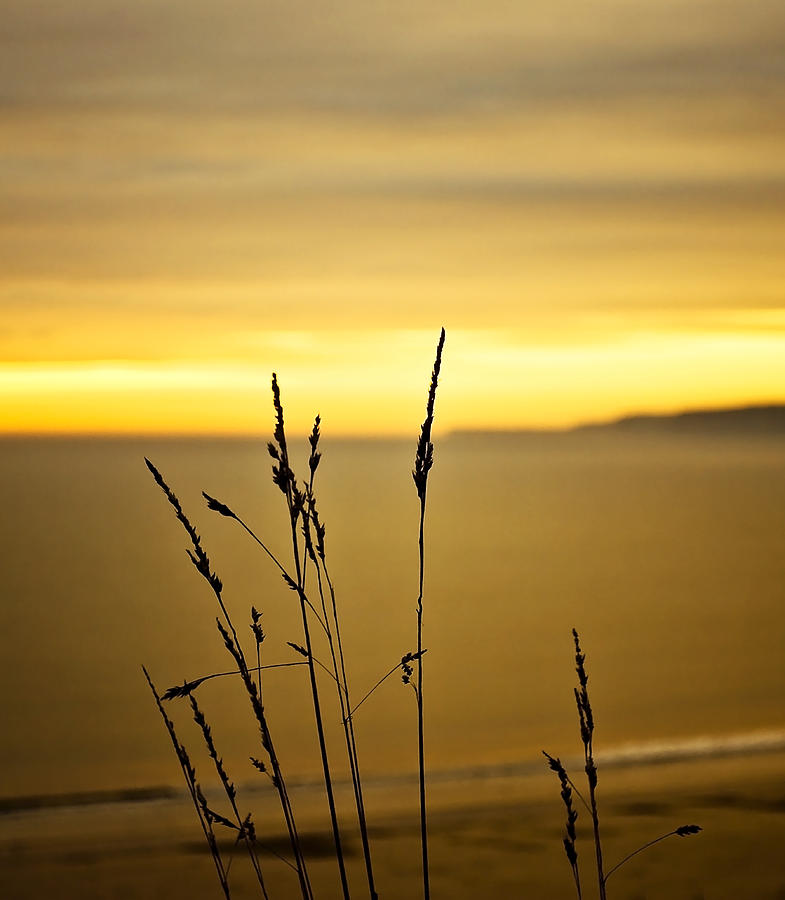 Sunset Photograph - Grass by Svetlana Sewell