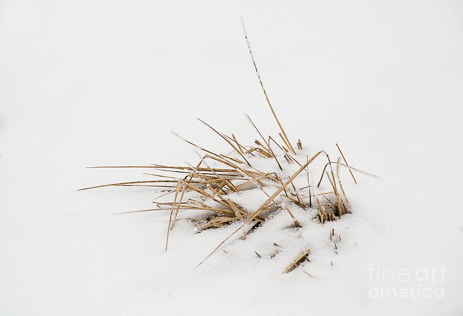 Kansas Photograph - Grass Vignette by Fred Lassmann