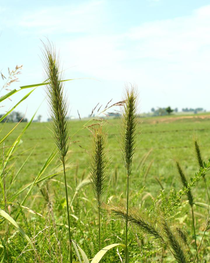 Landscape Photograph - Grasses by Sandra Collins