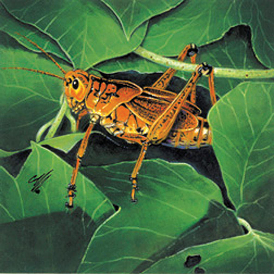 Insects Painting - Grasshopper by Durwood Coffey